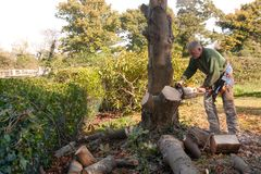 Derribo del árbol de castaña foto de archivo libre de regalías