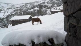 Derribo del caballo en un campo cubierto por la nieve delante de casas rurales metrajes