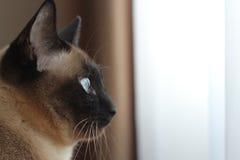 Derrière les yeux bleus Photographie stock