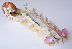 Dertien van orchideeën en Nautilus Stock Afbeelding