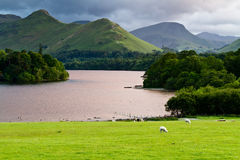 Derwent Water Lake District England. Sunset light on Derwent Water, Lake District, England, with sheep in the pasture and the Cat Bells (mountain) in the Stock Photography