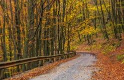 Desça a rotação da estrada na floresta do outono fotografia de stock royalty free