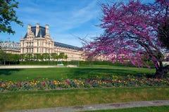 des庭院jardin pari tuileries 免版税库存图片