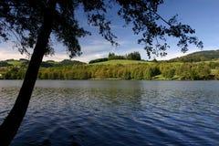 des法国LAC湖sapins 图库摄影