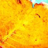 Des Abschlusses gelbe Blattbeschaffenheit oben - Lizenzfreie Stockbilder