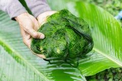 Des algues d'eau douce (espèces de Spirogyra) prêtes est employées pour faire la nourriture dans Luang Prabang, Laos ) prêt est e Photos libres de droits