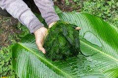 Des algues d'eau douce (espèces de Spirogyra) prêtes est employées pour faire la nourriture dans Luang Prabang, Laos ) prêt est e Photos stock