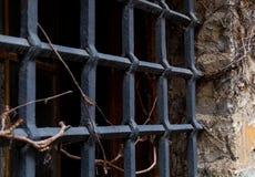 Des alten entwirrte sich dunkler Ausfall Gitter-Kerkers des Fensters durch wildes Traubenteil der alten Wand lizenzfreies stockfoto