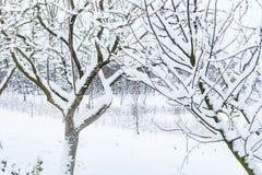 Des arbres dans le jardin sont couverts de neige image libre de droits