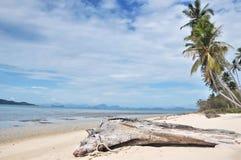 Des arbres morts ont été morts sur le sable près de la mer Photographie stock libre de droits