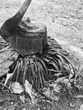 Des arbres ont été abattus, laissant seulement un tronçon, couteau d'A coincé dans à image libre de droits