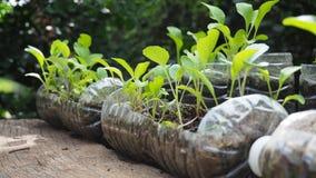 Des arbres sont plantés dans des bouteilles en plastique réutilisées Planté dans une bouteille Le plastique réutilisent photo libre de droits