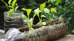 Des arbres sont plantés dans des bouteilles en plastique réutilisées Planté dans une bouteille Le plastique réutilisent photographie stock libre de droits