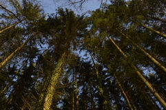 Des arbres tournoyant Στοκ Εικόνες