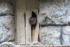 Des autres des lémurs photo libre de droits