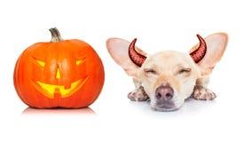 Des bonbons ou un sort de chien de fantôme de Halloween Photographie stock libre de droits