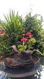 Des Botanikfarbdekorationsflora-Blumengartens des Hintergrundes schöner beautybotanical Naturbetriebssommer im Garten arbeitender lizenzfreie stockfotografie
