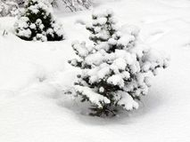Des branches d'un sapin sont couvertes de neige image stock