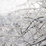 Des branches de l'arbre sont couvertes de la glace Saison de l'hiver Arbres image stock