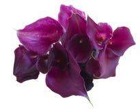 Des Calla Blumen lilly Lizenzfreies Stockfoto