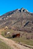 Des chevaux sont frôlés en bas des montagnes près du courant alternatif Image stock