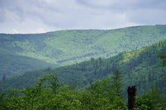 Des collines en montagnes polonaises, vous pouvez voir les arbres grands croissants et le ciel bleu Photo libre de droits