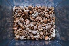 Des coquilles de beaucoup de types et de tailles sont trouv?es sur nos plages de d?corticage Vue en gros plan et sup?rieure, conc images stock
