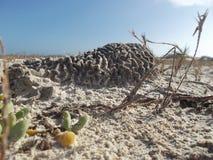 Des coraux sont gonflés pour échapper à être vivants enterré dans le sable photo stock