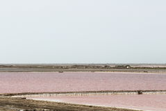 DES Crottes, Camargue de Salin du Mas dans les Frances Photo stock