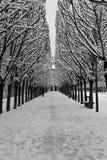 DES de Jardin Tuileries - Paris images libres de droits