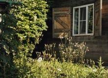 des Fenstergartens des hölzernen Hauses Grünpflanze-Sonnenlichtsommer Stockbilder