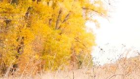Des feuilles de forêt d'automne sont versées des arbres Mouvement lent banque de vidéos
