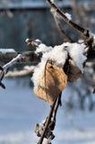 Des feuilles sèches des pommiers sont couvertes de neige et de macro de gel photo libre de droits