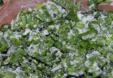 Des Flechtensommers des Frost-Dillkrautjahreszeitwassers Kiefernwaldnahaufnahmeniederlassung des frischen immergrünen Buschblatte Stockbild