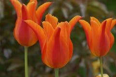 Des fleurs dans les couleurs sensationnelles elle représentent la nature, l'été Image libre de droits
