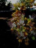 Des fleurs multicolores, les usines boisées sont trouvées beaucoup au Vietnam image stock