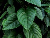 Des fleurs vertes sont formées comme des coeurs et les baisses de rosée régénèrent Image stock