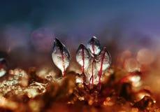 Des glaçons brillants sont couverts par la mousse verte dans une forêt en hiver photos stock