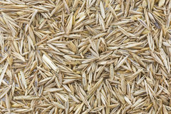 Des graines d'herbe peuvent être employées comme fond Photos libres de droits