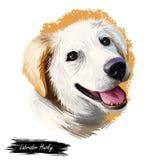 Des heiseren kanadischen digitale Kunstillustration Haustierporträts Labradors Säugetier stammte aus Kanada ausbildete, um Schlit vektor abbildung