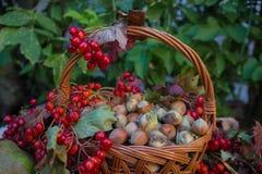 Des Herbstes Leben noch Lizenzfreie Stockfotografie