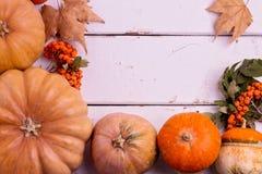 Des Herbstes Leben noch Kürbise für Halloween und Danksagungs-Tag Stockfoto