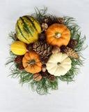 Des Herbstes Leben noch mit Kürbisen und Kieferkegeln lizenzfreies stockbild