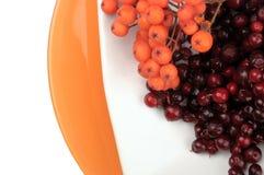 Des Herbstes Leben noch Rote saftige reife Beeren Preiselbeere und Ebereschenbeeren liegen auf einer weißen Untertasse auf orange Lizenzfreies Stockfoto