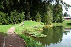 des joncs λάκκα Ελβετία Στοκ φωτογραφία με δικαίωμα ελεύθερης χρήσης