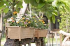 Des jours de soleil lumineux, il y a de belles fleurs oranges et rouges Photographie stock libre de droits