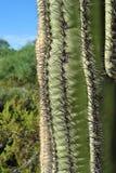 Des Kaktus nahe Vertretung oben die Dornen Lizenzfreies Stockfoto