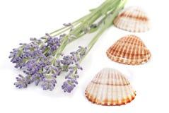 Des Lavendels Leben noch Lizenzfreie Stockfotografie