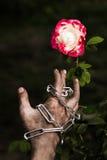 Des mains sales sont attachées avec des roses attaché avec amour Images libres de droits