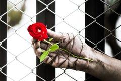 Des mains sales sont attachées avec des roses attaché avec amour Photographie stock